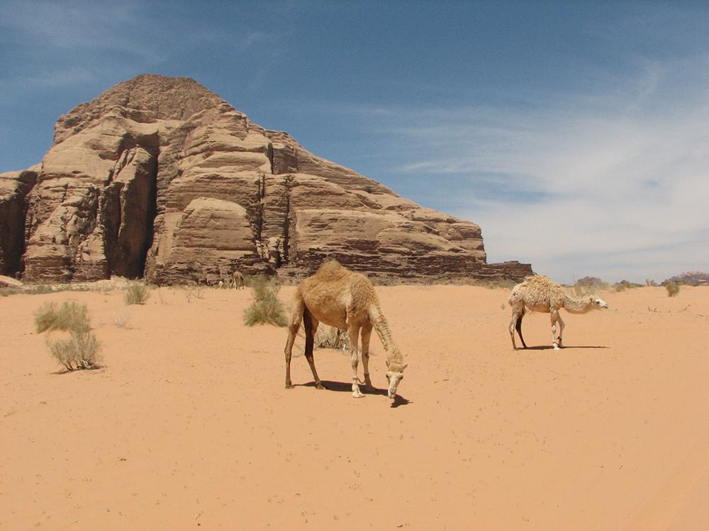 Wadi Rum este un loc incredibil de frumos. Mie mi-a rămas la suflet. M-aş duce oricând înapoi şi cu siguranţă aş sta mai mult de două zile. Aş lua un tur cu cămila, ca să nu trec aşa de repede pe lângă atâtea locuri ireal de frumoase. Iar după ultima noapte petrecută în deşert, sub milioane de stele, aş pleca spre casă, pentru a păstra senzaţia de linişte cât mai mult timp.